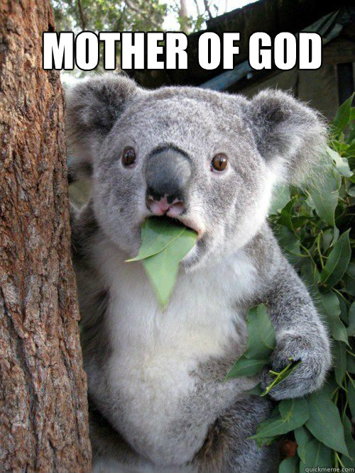 Mother of God  Shocked Koala