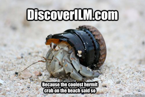 DiscoverILM.com Because the coolest hermit crab on the beach said so  Hermit Crab