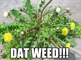 DAT WEED!!!  weed