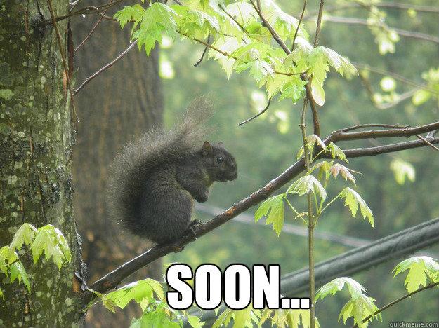 e87917b7d05e1a1baf4c1eb76e29ecfb4f280c9f9b65efca043e021abfddade2 soon evil squirrel quickmeme