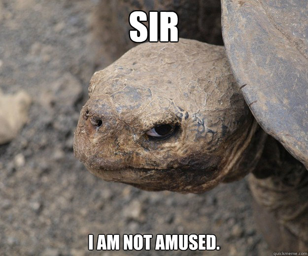 Sir I am not amused. - Sir I am not amused.  Insanity Tortoise