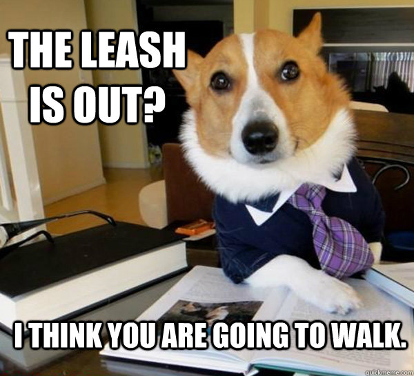 The Leash is out? I think you are going to walk. - The Leash is out? I think you are going to walk.  Lawyer Dog