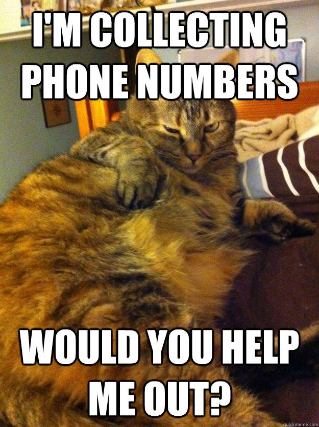 Seductive cat is seductive