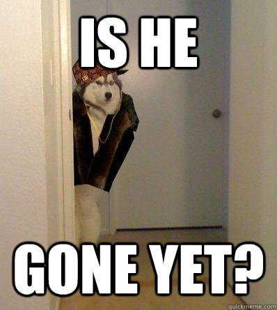IS HE GONE YET? - IS HE GONE YET?  Scumbag dog
