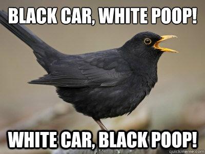 Black car, white poop! White car, black poop!