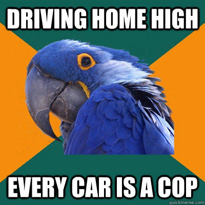 driving home high every car is a cop - driving home high every car is a cop  Paranoid Parrot