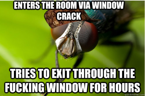 enters the room via window crack Tries to exit through the fucking window for hours
