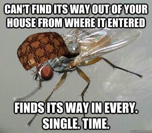 Can't find its way out of your house from where it entered Finds its way in every. single. time.