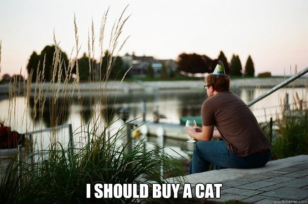 I should buy a cat -  I should buy a cat  I should buy a cat person