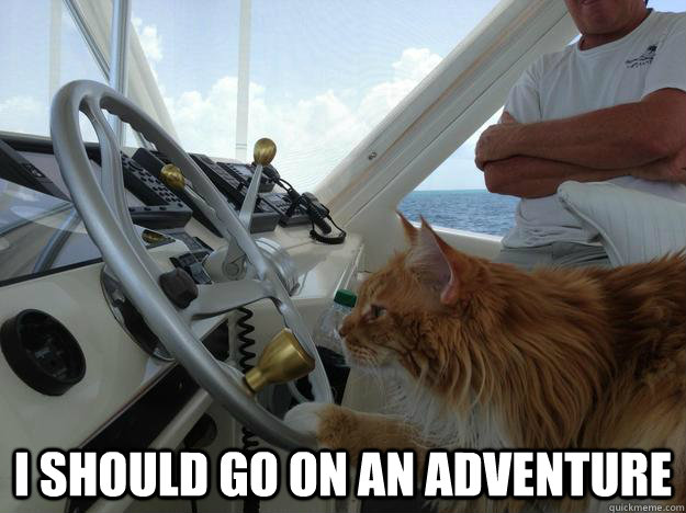 i should go on an adventure -  i should go on an adventure  Boating Cat