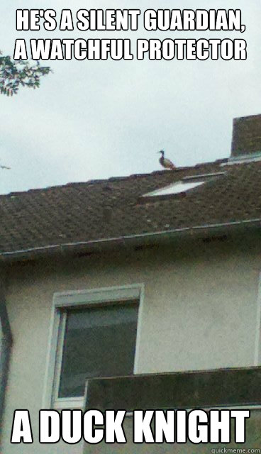 hes a silent guardian a watchful protector a duck knight