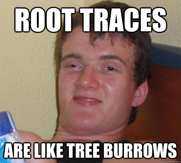 root traces Are like tree burrows - root traces Are like tree burrows  10 Guy