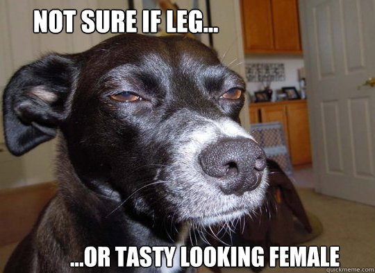 Not sure if leg... ...or tasty looking female