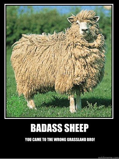 Badass sheep You came to the wrong grassland bro!