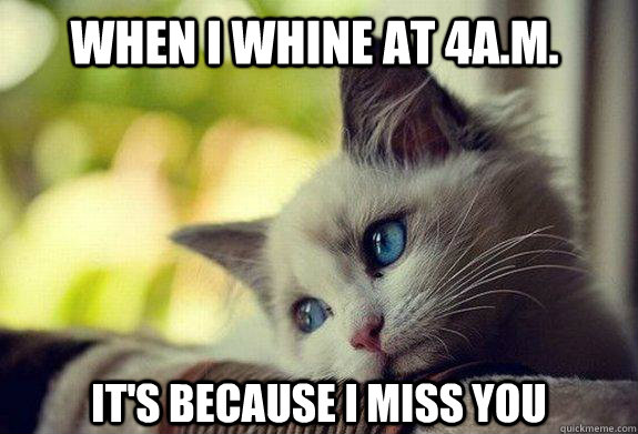 When I whine at 4a.m. It's because I miss you  Sad cat