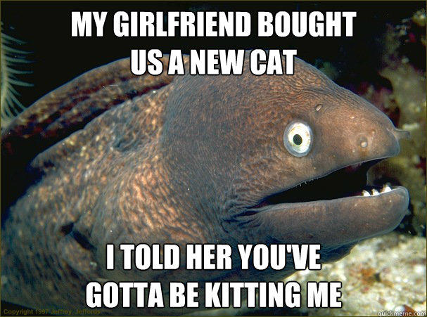 My girlfriend bought us a new cat I told her you've gotta be kitting me - My girlfriend bought us a new cat I told her you've gotta be kitting me  Bad Joke Eel