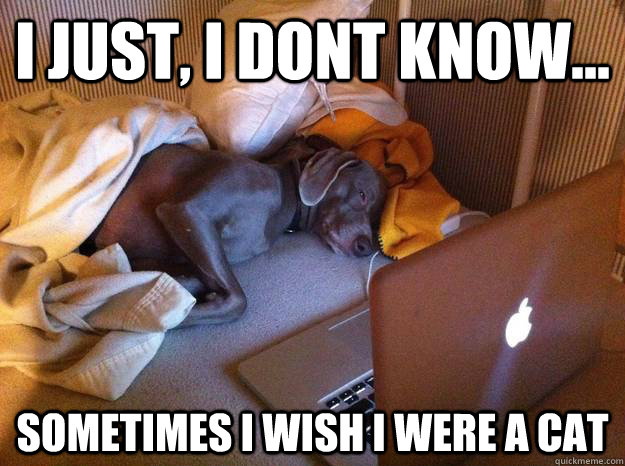 I Just, I dont know... sometimes i wish i were a cat - I Just, I dont know... sometimes i wish i were a cat  Redditors Dog