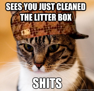 Sees you just cleaned the litter box Shits - Sees you just cleaned the litter box Shits  Scumbag Cat