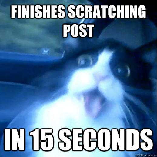 Finishes scratching post In 15 seconds - Finishes scratching post In 15 seconds  Adderall Cat