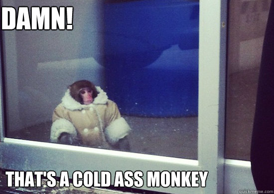 DAMN! That's a cold ass monkey