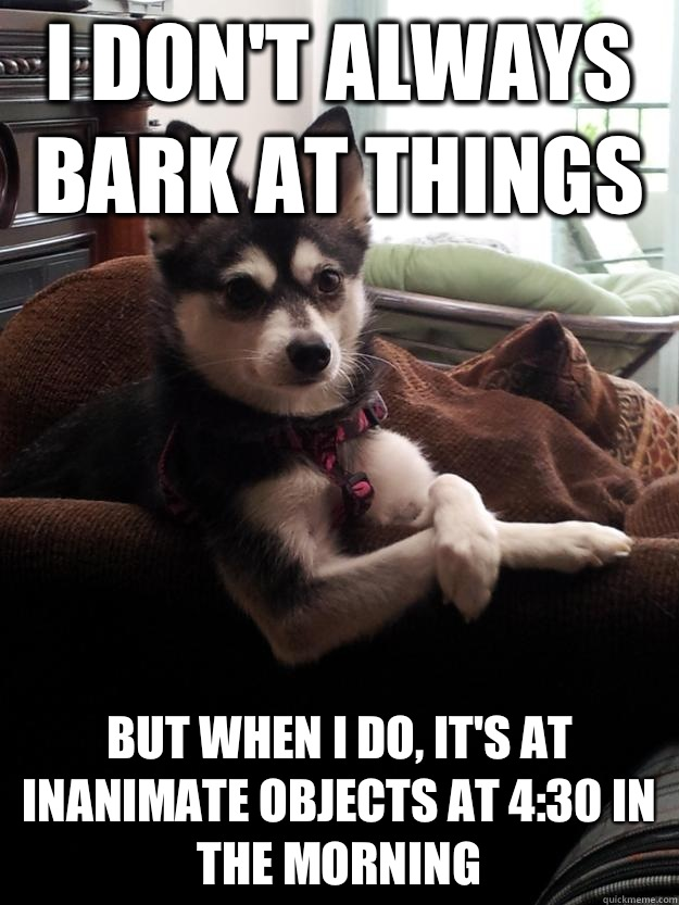 I don't always bark at things but when i do, it's at inanimate objects at 4:30 in the morning