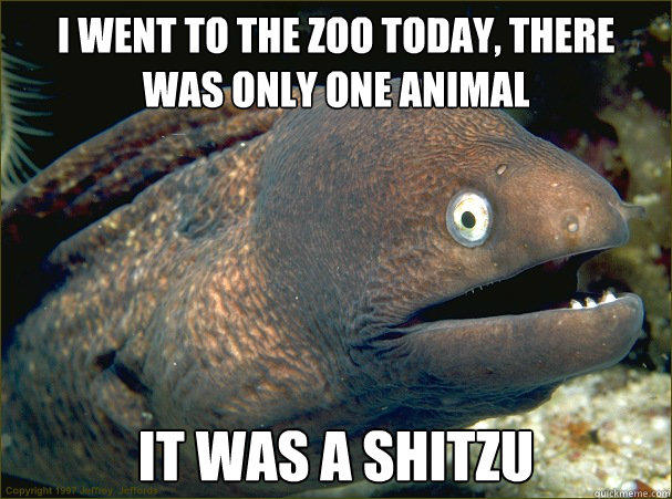 I went to the zoo today, there was only one animal  It was a Shitzu  - I went to the zoo today, there was only one animal  It was a Shitzu   Bad Joke Eel