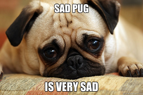 Sad pug is very sad  sad pug