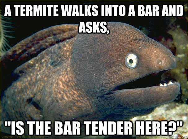 a termite walks into a bar and asks,