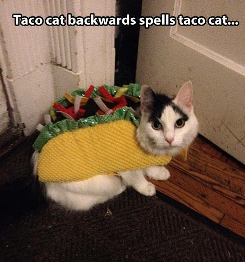 Taco Cat was an inside job -   Misc