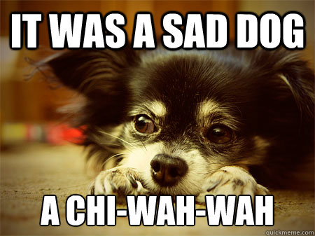 It was a sad dog A Chi-wah-wah