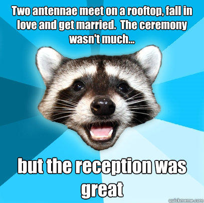 Two antennae meet on a rooftop, fall in love and get married.  The ceremony wasn't much... but the reception was great - Two antennae meet on a rooftop, fall in love and get married.  The ceremony wasn't much... but the reception was great  Lame Pun Coon