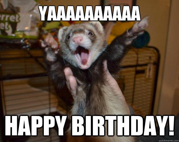Image result for ferret happy birthday pix