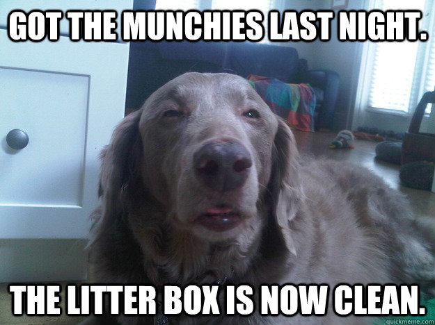 Got the munchies last night. The litter box is now clean.  - Got the munchies last night. The litter box is now clean.   10 Dog