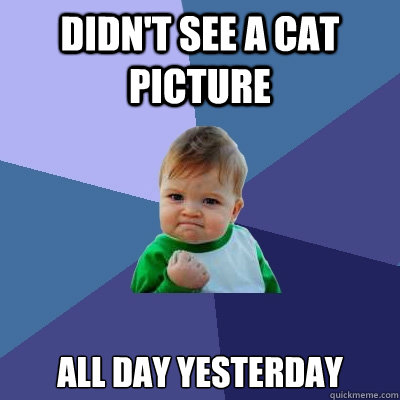 didn't see a cat picture all day yesterday - didn't see a cat picture all day yesterday  Success Kid