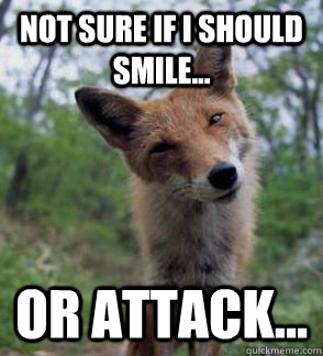 Not sure if I should smile... Or attack...  Confused Fox