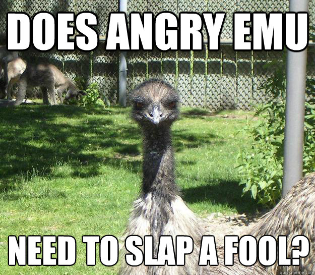 Does Angry Emu  Need to slap a fool?