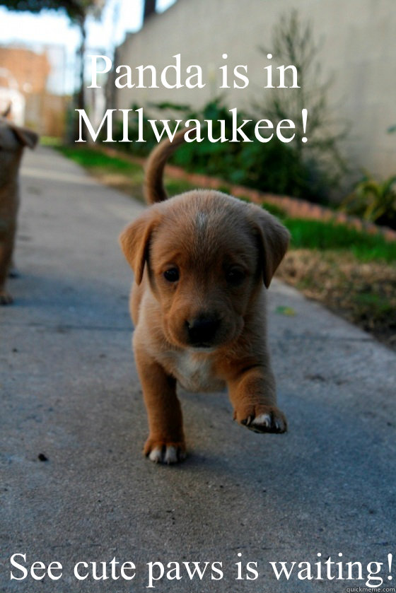 Panda is in MIlwaukee! See cute paws is waiting!