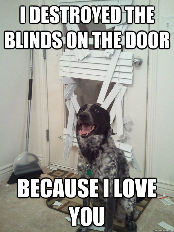 I destroyed the blinds on the door because i love you