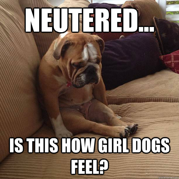 neutered... is this how girl dogs feel?  depressed dog
