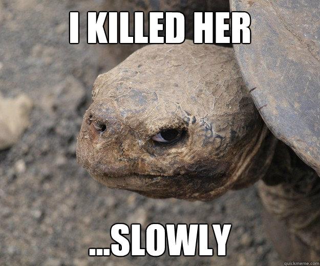 I killed her ...slowly  Insanity Tortoise