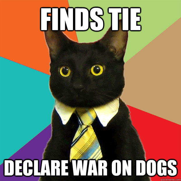 Finds Tie Declare war on dogs - Finds Tie Declare war on dogs  Business Cat