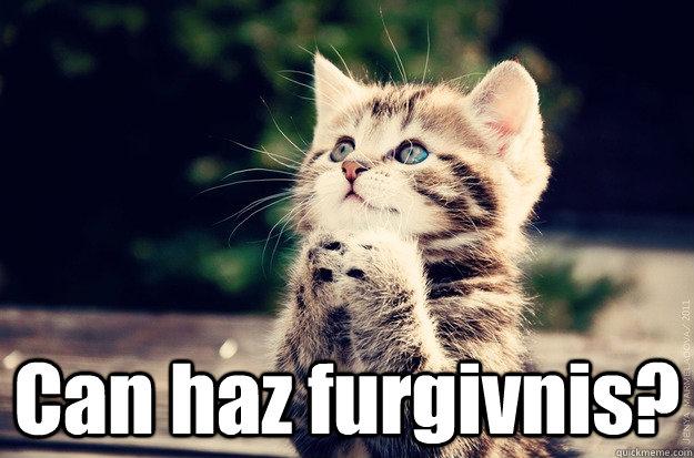 Can haz furgivnis? -  Can haz furgivnis?  Prayer Cat