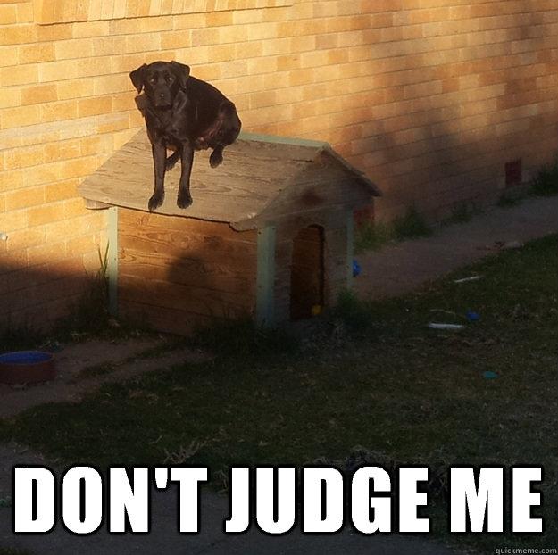 DON'T JUDGE ME -  DON'T JUDGE ME  Dog on house
