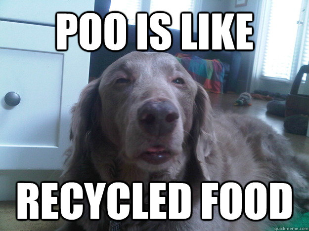 Poo is like recycled food - Poo is like recycled food  10 Dog