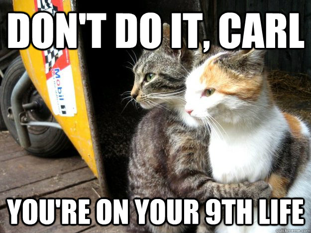 Don't do it, carl you're on your 9th life - Don't do it, carl you're on your 9th life  Restraining Cat