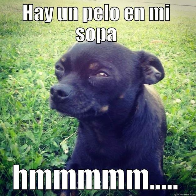 HAY UN PELO EN MI SOPA HMMMMM..... Skeptical Dog