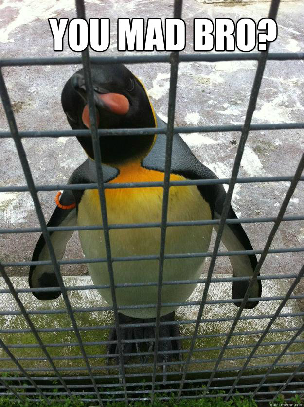 You mad bro? - You mad bro?  mad penguin