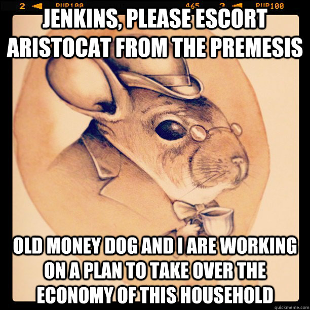 Jenkins, please escort aristocat from the premesis Old money dog and I are working on a plan to take over the economy of this household - Jenkins, please escort aristocat from the premesis Old money dog and I are working on a plan to take over the economy of this household  Robber Baron Chinchilla