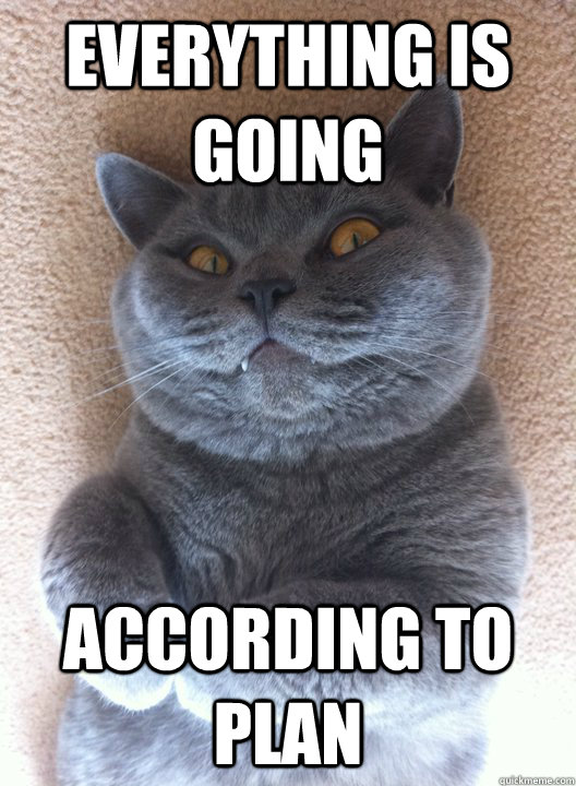 EVERYTHING IS GOING ACCORDING TO PLAN  Evil Cat