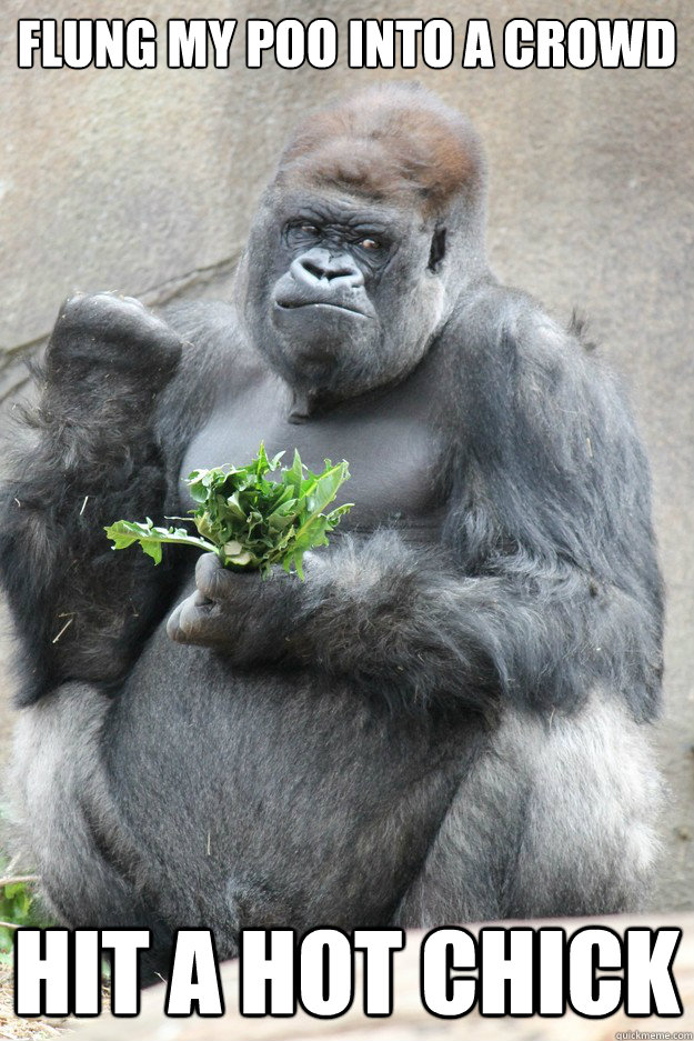 Flung my poo into a crowd Hit a hot chick  Success Gorilla